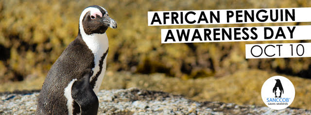 African Penguin Awareness Day